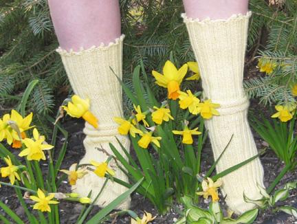 daffodil 08