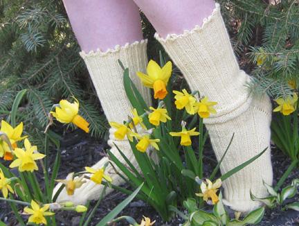 daffodil 09