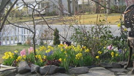 daffodil 10