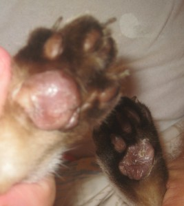 both hind feet september 1